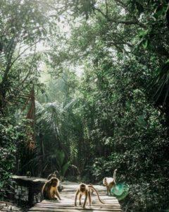 Tempat Hunting di Banjarmasin